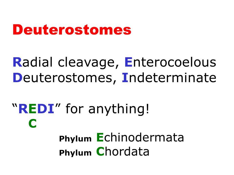 Deuterostomes (2 Phyla)