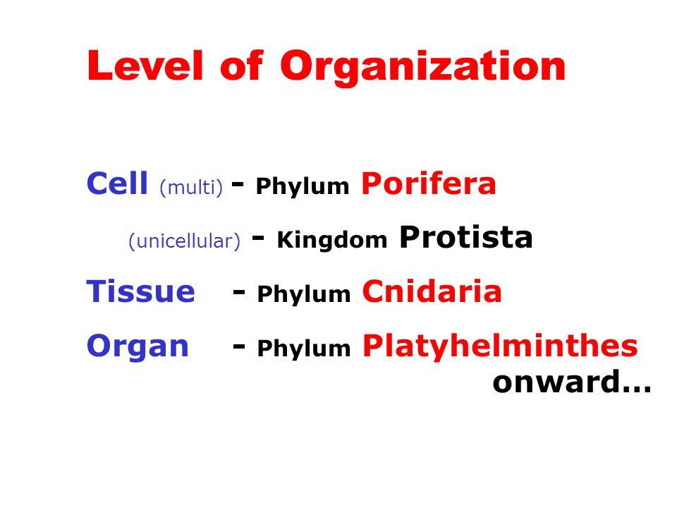 Level of Organization Cell (multi) - Phylum Porifera