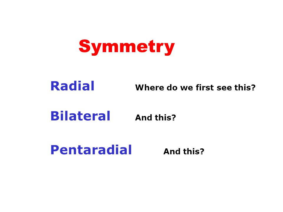Symmetry Radial Where do we first see this Bilateral And this