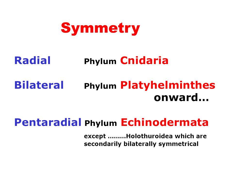 Symmetry Radial Phylum Cnidaria Bilateral Phylum Platyhelminthes