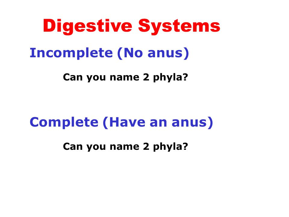 Digestive Systems Incomplete (No anus) Can you name 2 phyla