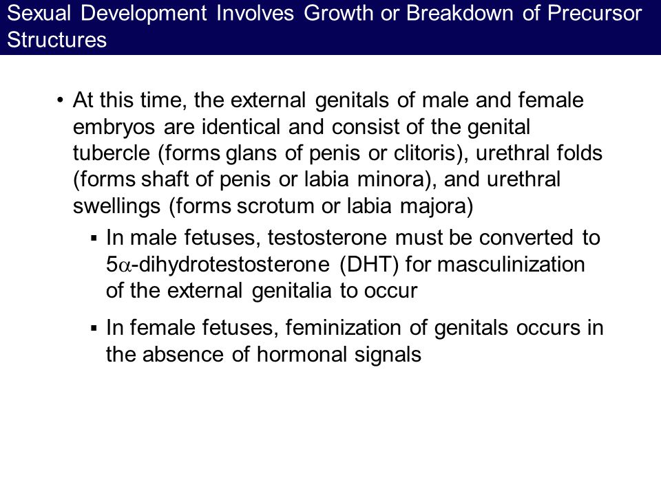 Sexual Development Involves Growth or Breakdown of Precursor Structures
