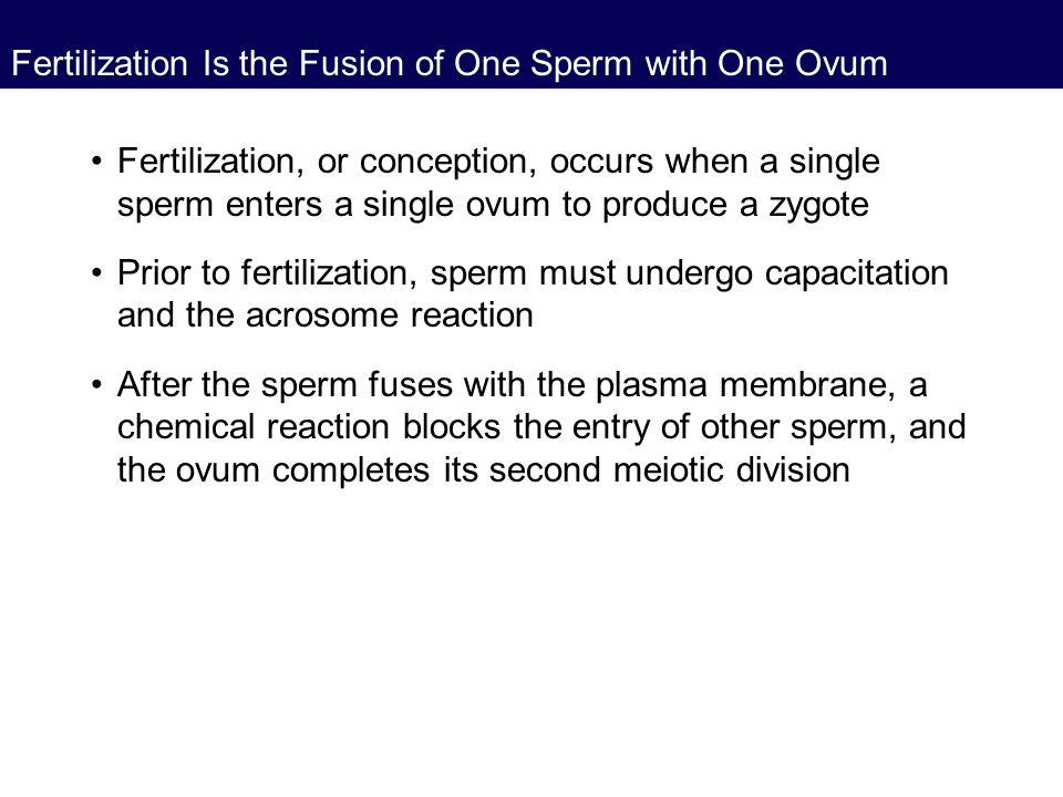 Fertilization Is the Fusion of One Sperm with One Ovum