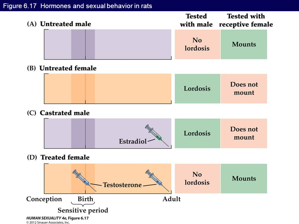 Figure 6.17 Hormones and sexual behavior in rats
