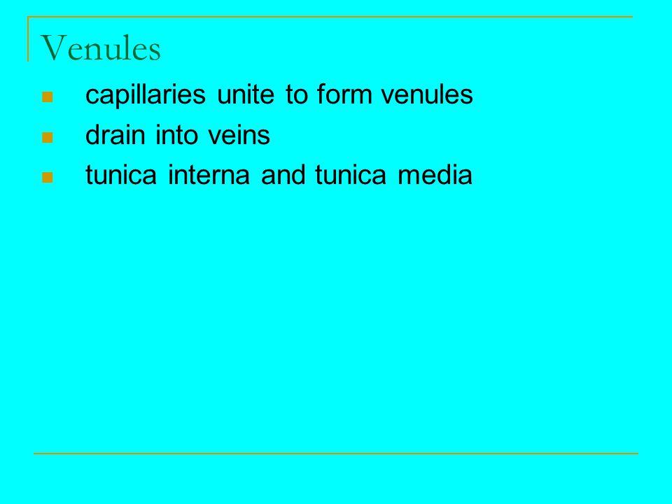 Venules capillaries unite to form venules drain into veins
