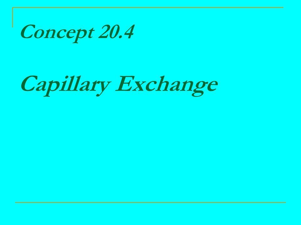 Concept 20.4 Capillary Exchange