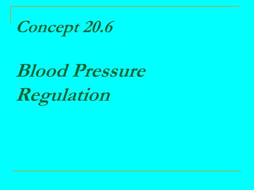 Concept 20.6 Blood Pressure Regulation