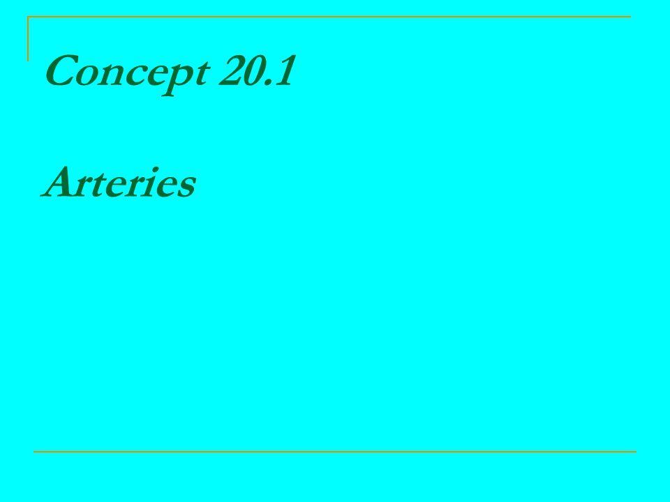 Concept 20.1 Arteries