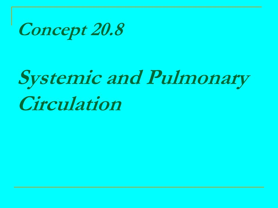 Concept 20.8 Systemic and Pulmonary Circulation
