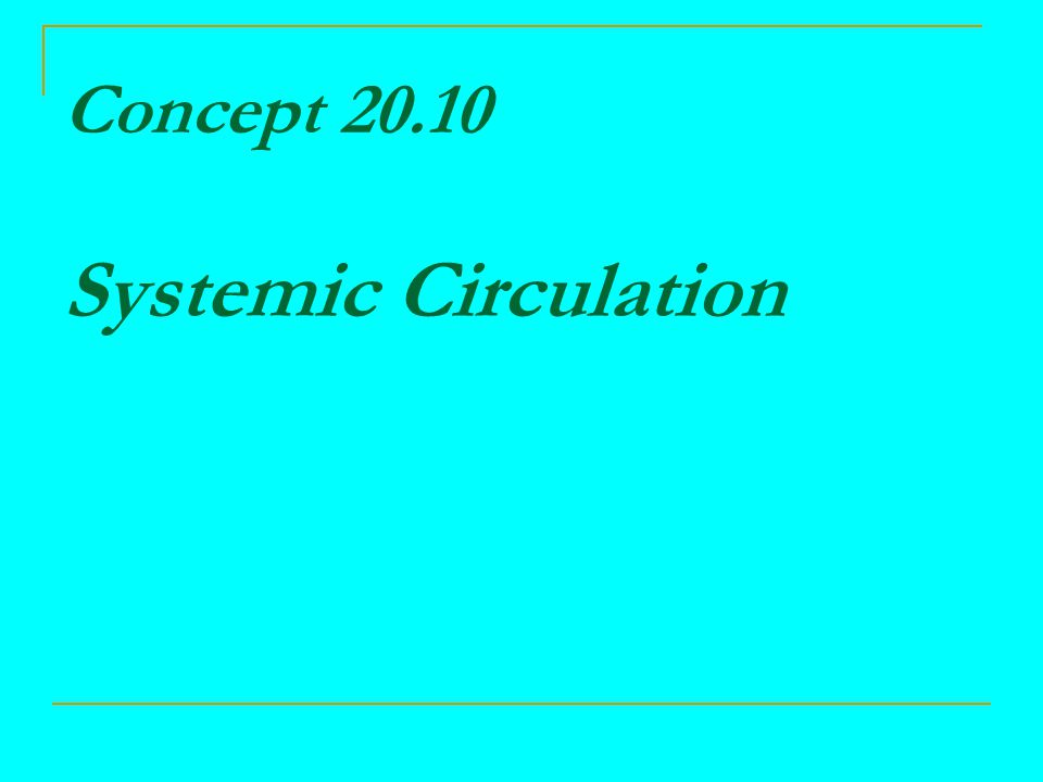 Concept 20.10 Systemic Circulation