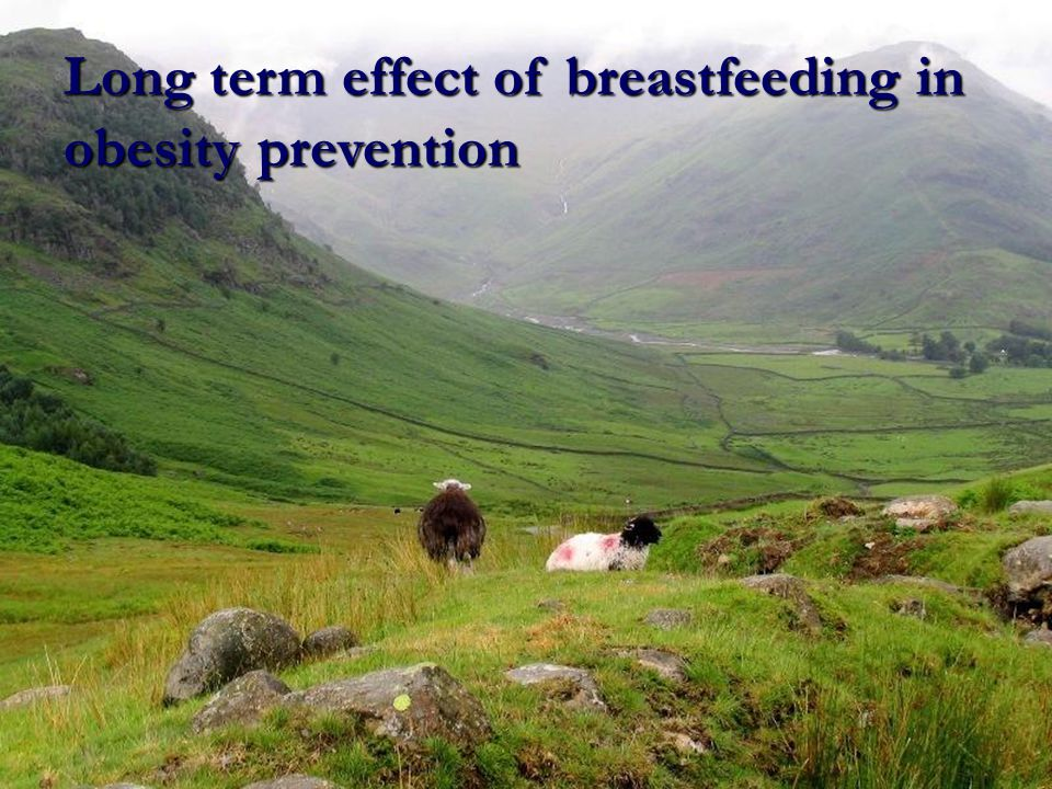 Long term effect of breastfeeding in obesity prevention