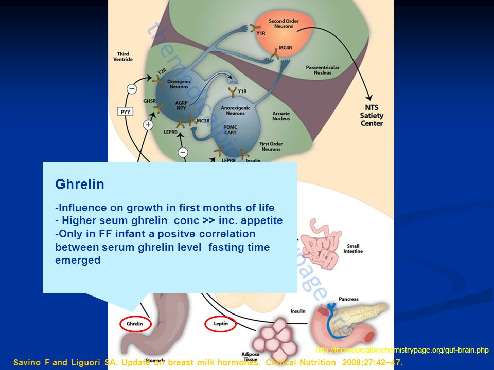 Ghrelin Influence on growth in first months of life