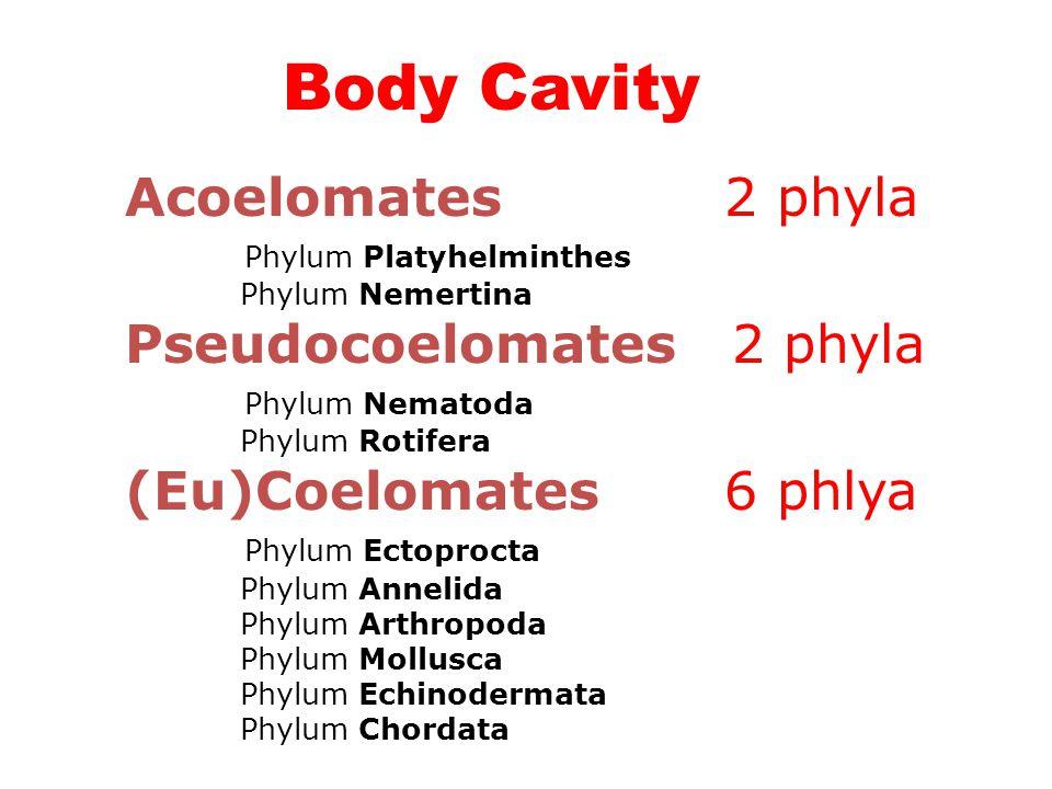 Body Cavity Acoelomates 2 phyla Pseudocoelomates 2 phyla