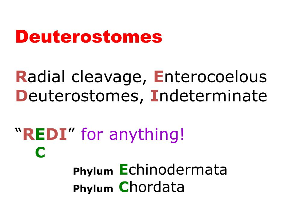 Deuterostomes (2 Phyla)
