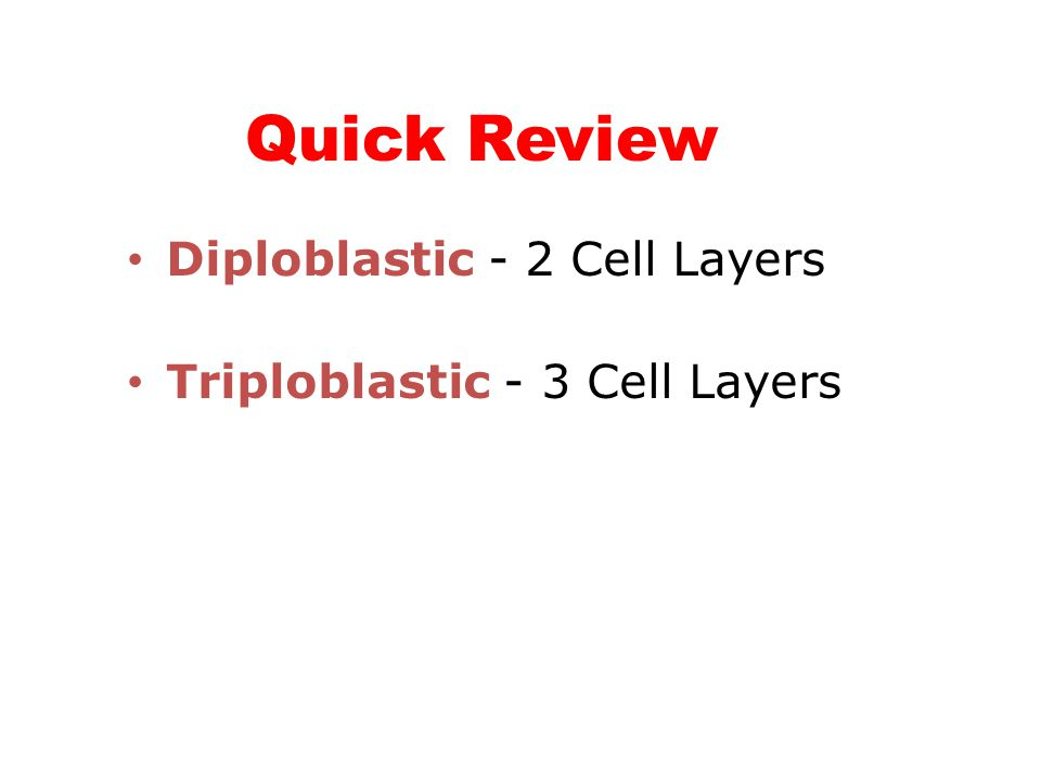 Quick Review Diploblastic - 2 Cell Layers