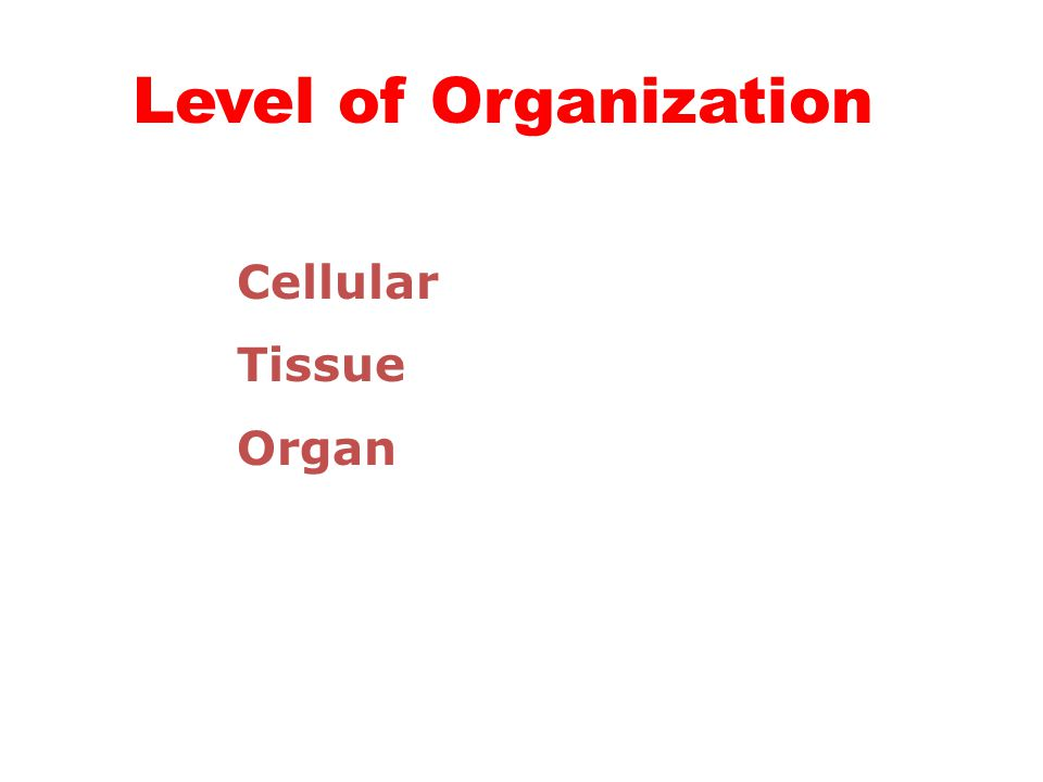 Level of Organization Cellular Tissue Organ