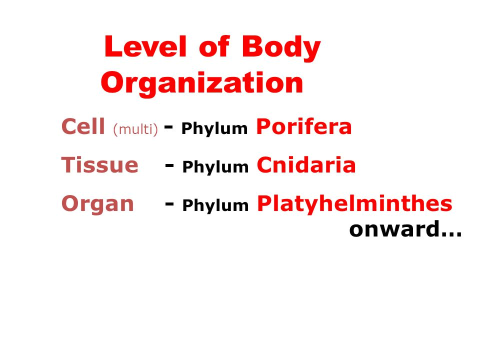 Level of Body Organization