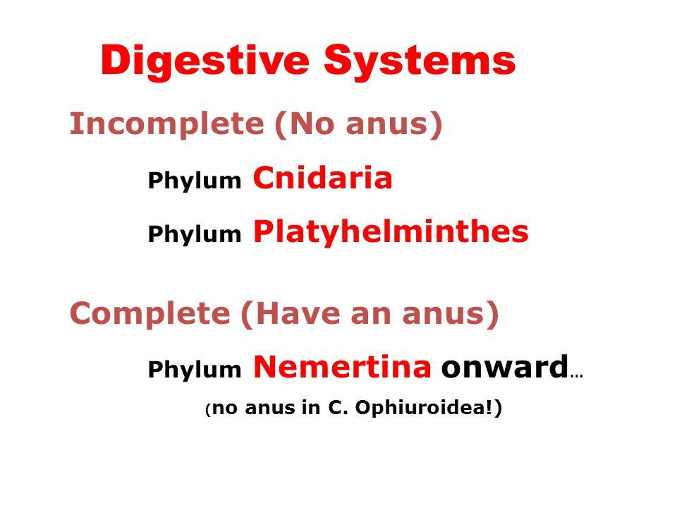 Digestive Systems Incomplete (No anus) Phylum Cnidaria