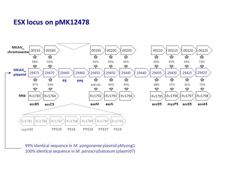 ESX locus on pMK12478 MKAN_. chromosome. 00155. 00160. 00195. 00200. 00205. 00210. 00215. 00220.