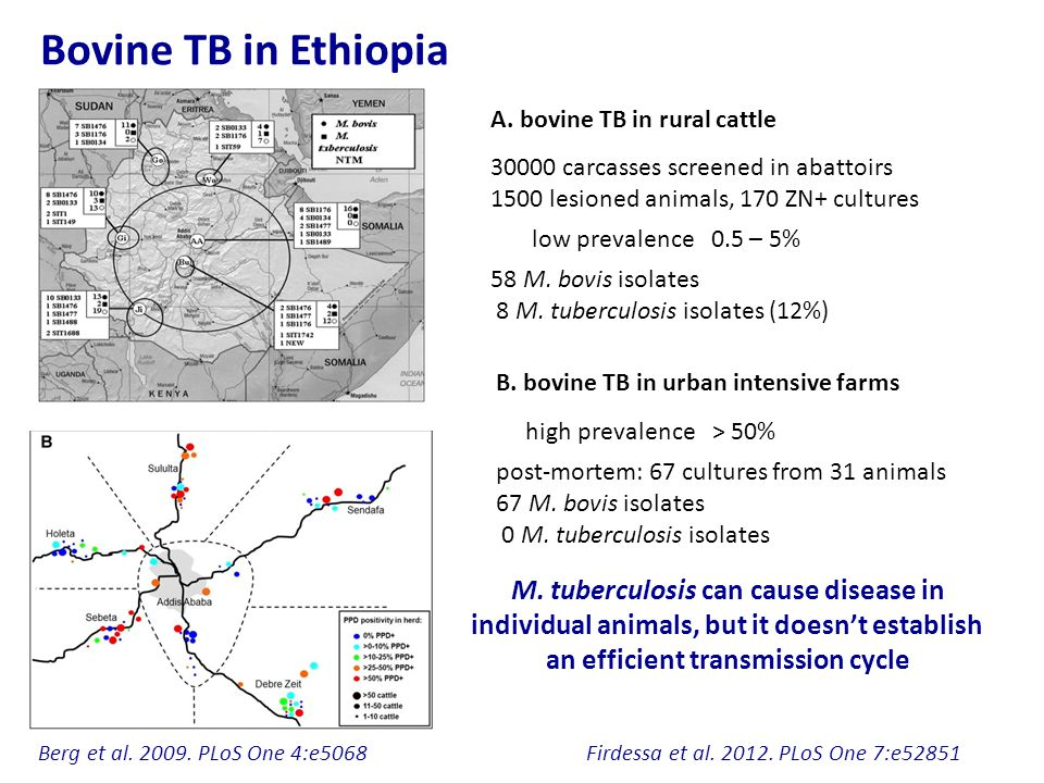 Bovine TB in Ethiopia M. tuberculosis can cause disease in