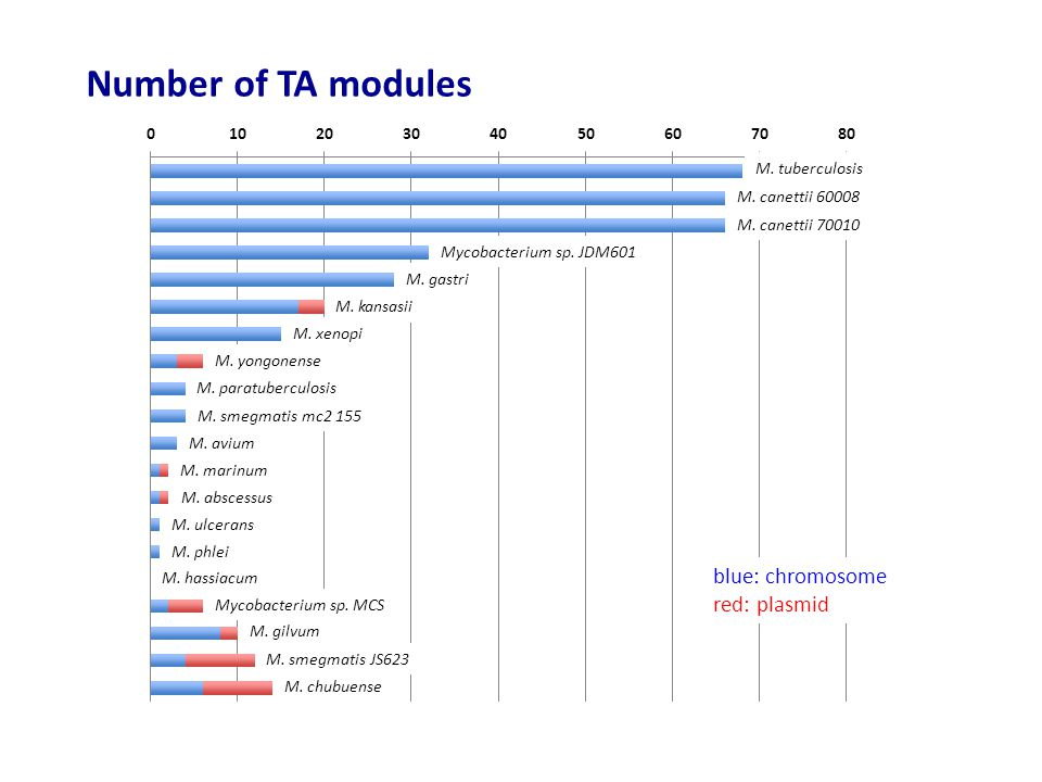 Number of TA modules blue: chromosome red: plasmid M. tuberculosis