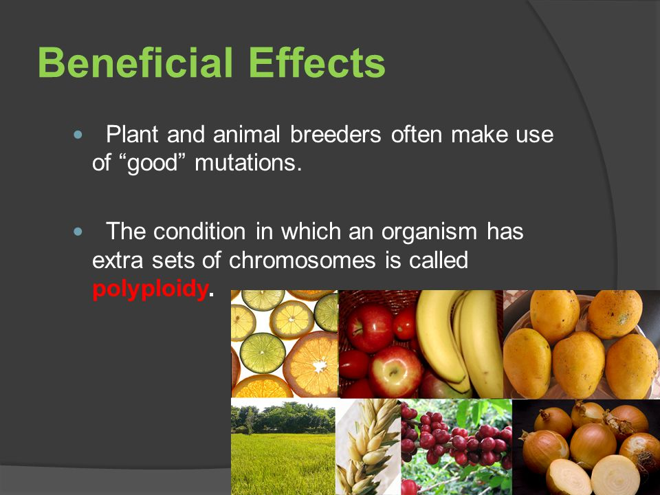 Beneficial Effects Plant and animal breeders often make use of good mutations.