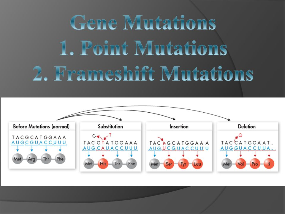 Gene Mutations 1. Point Mutations 2. Frameshift Mutations