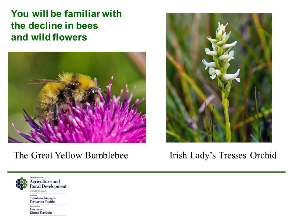 You will be familiar with the decline in bees and wild flowers