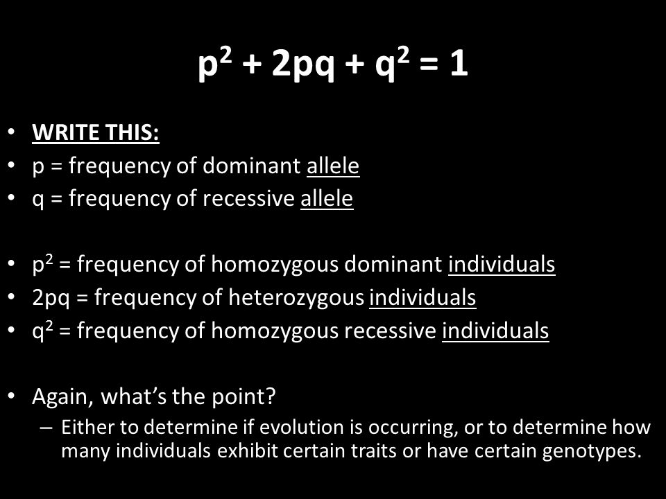 p2 + 2pq + q2 = 1 WRITE THIS: p = frequency of dominant allele