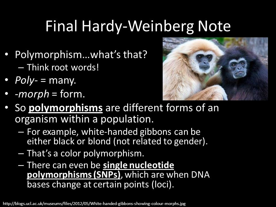 Final Hardy-Weinberg Note
