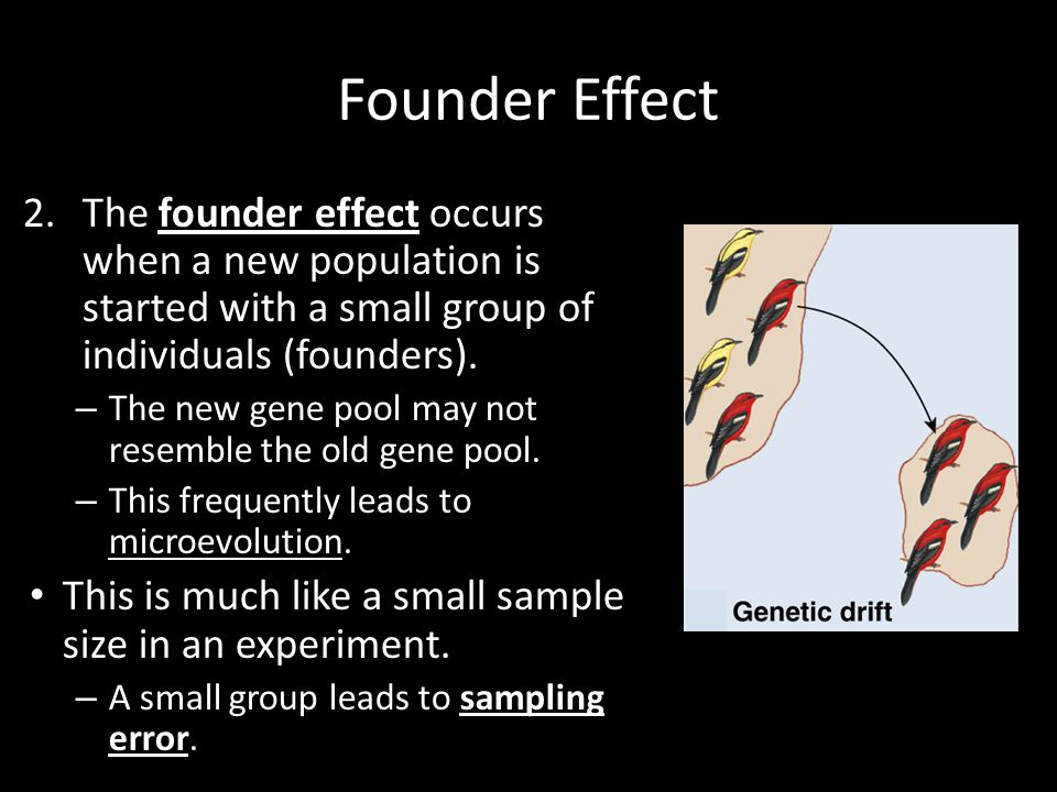 Founder Effect The founder effect occurs when a new population is started with a small group of individuals (founders).