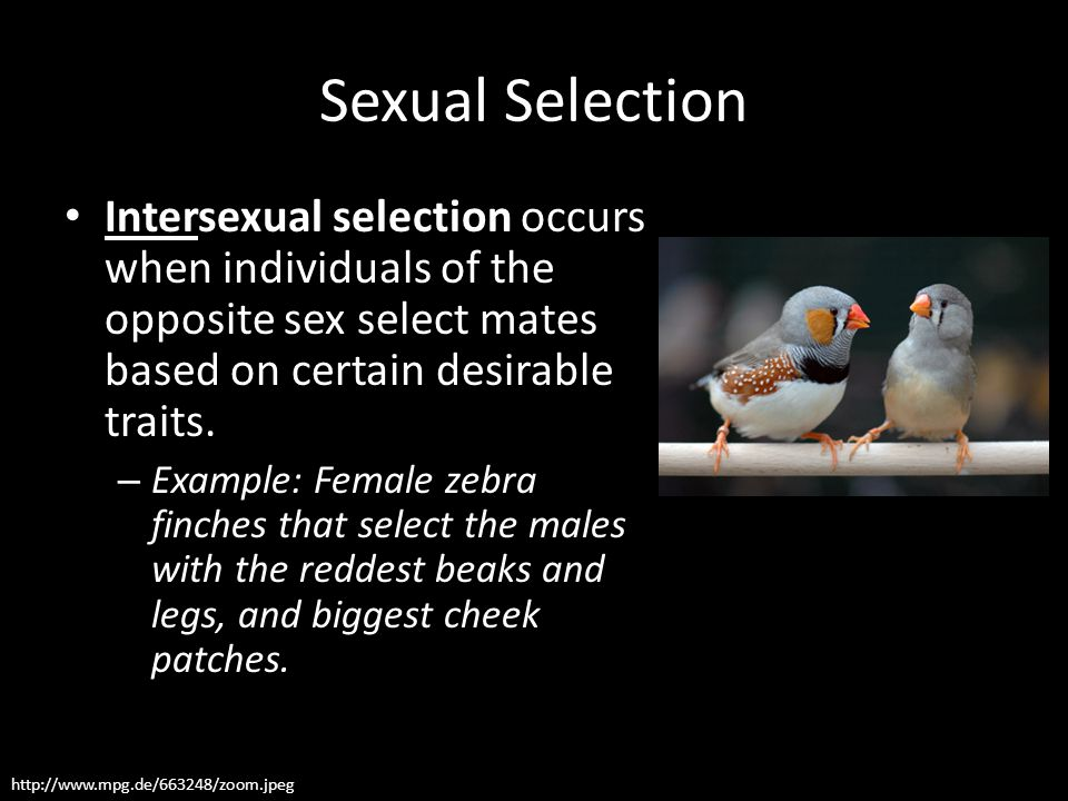 Sexual Selection Intersexual selection occurs when individuals of the opposite sex select mates based on certain desirable traits.