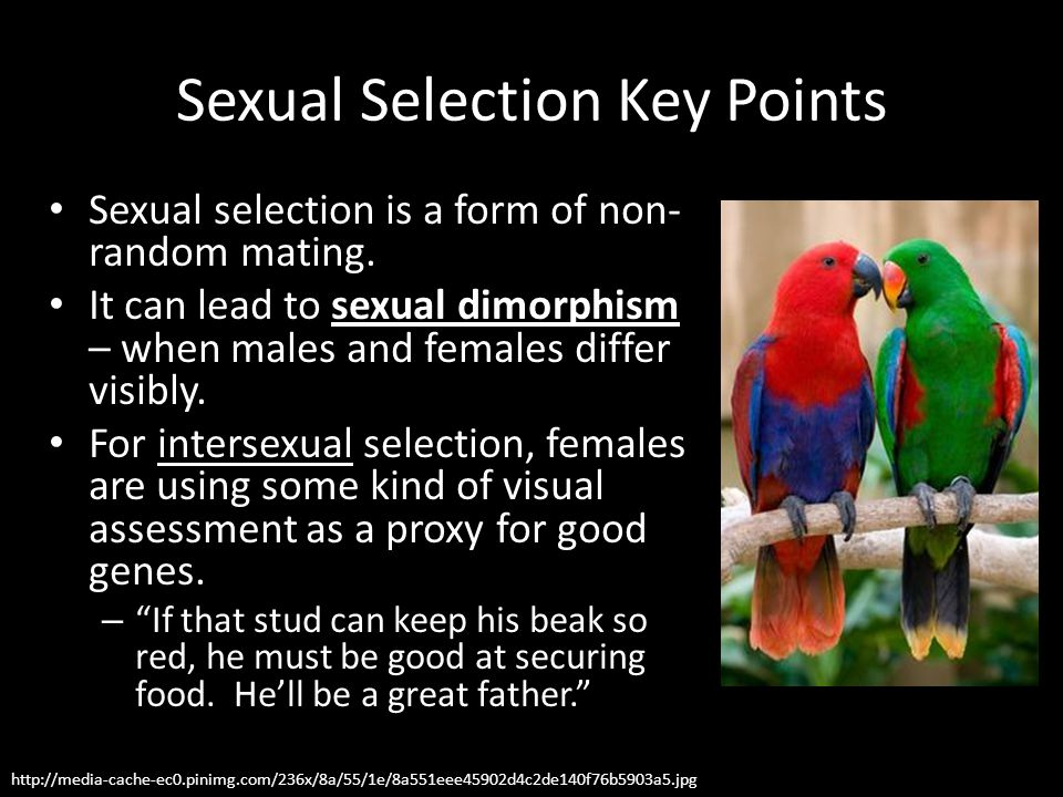 Sexual Selection Key Points
