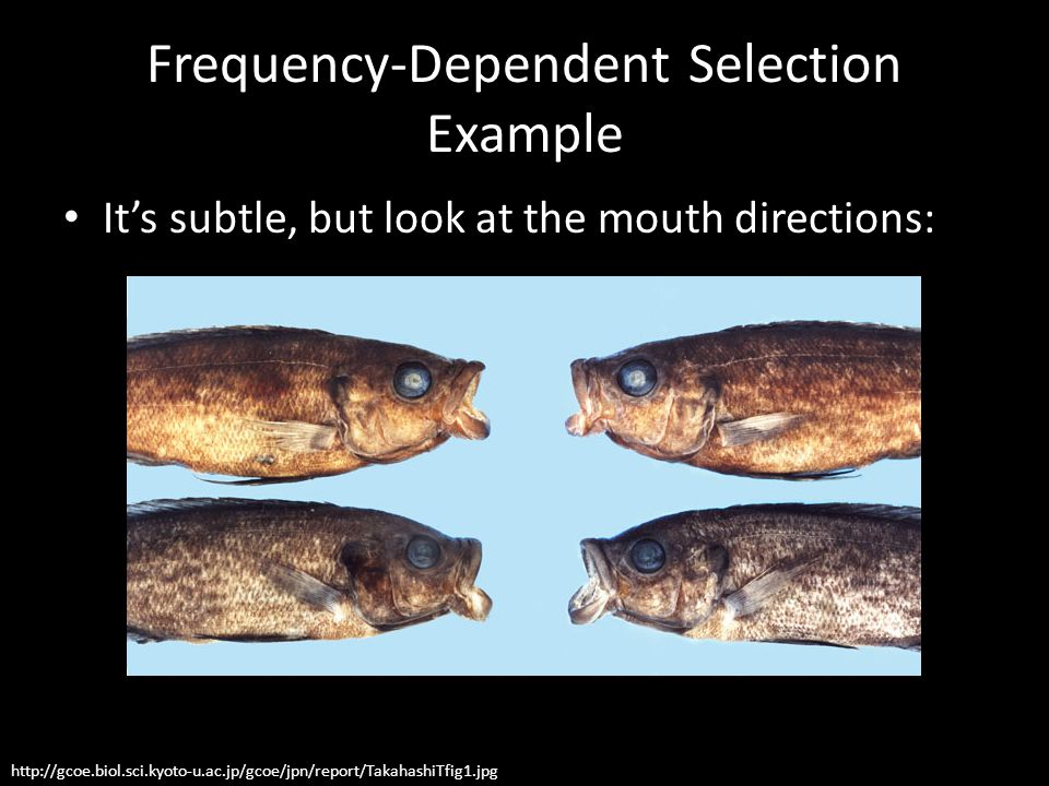 Frequency-Dependent Selection Example