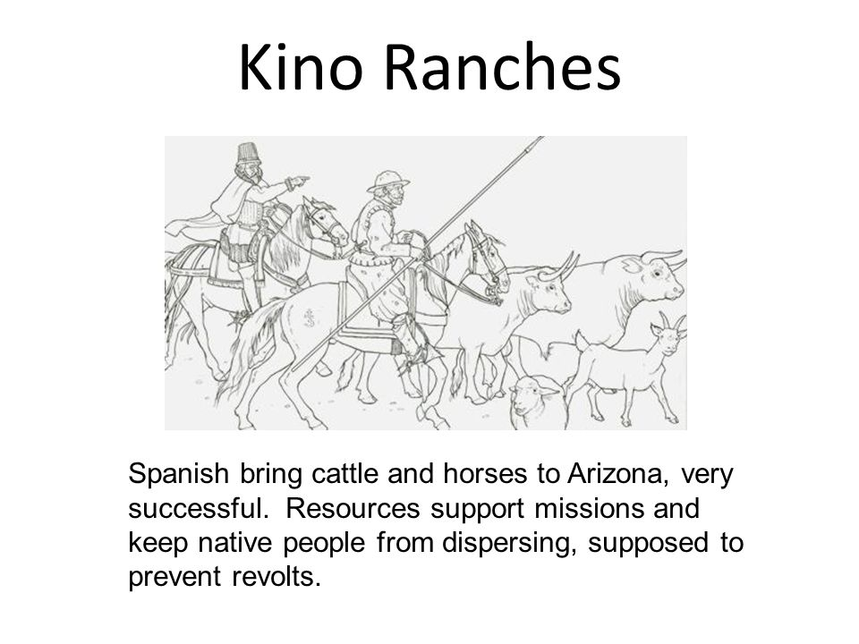 Kino Ranches Spanish bring cattle and horses to Arizona, very