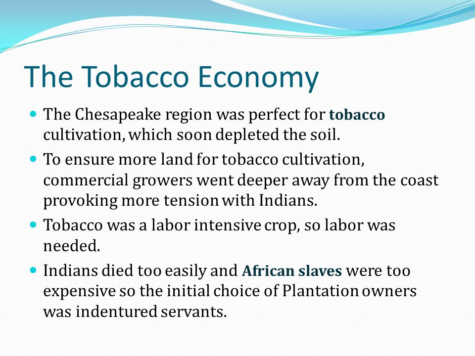 The Tobacco Economy The Chesapeake region was perfect for tobacco cultivation, which soon depleted the soil.