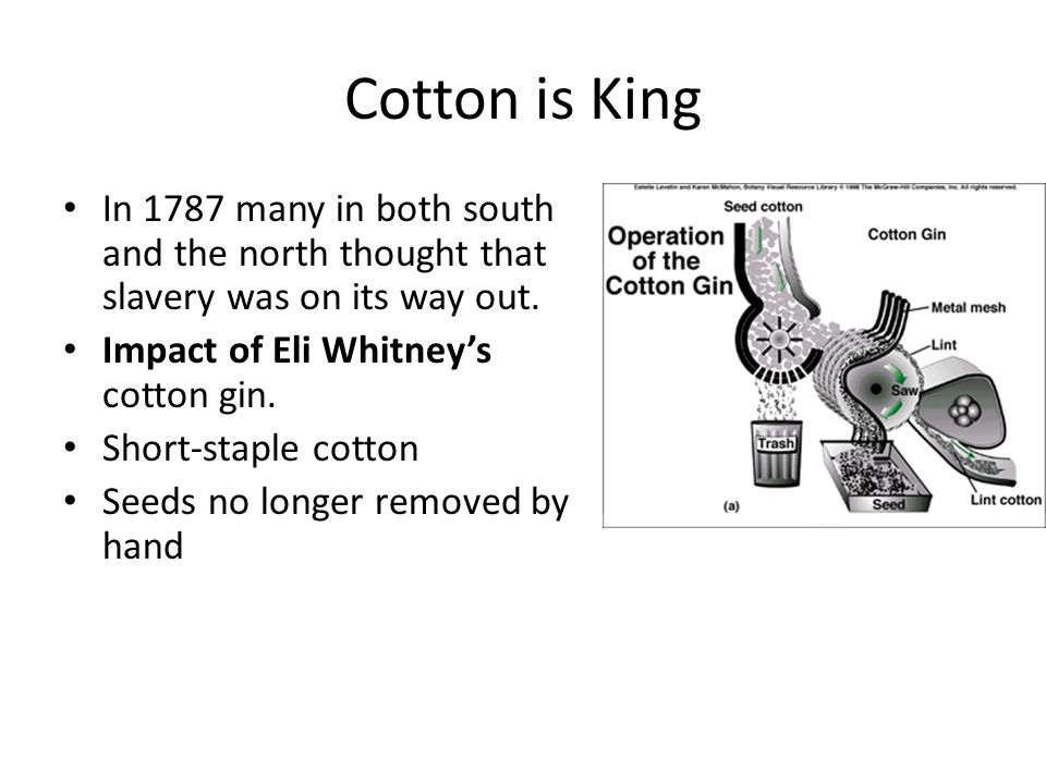 Cotton is King In 1787 many in both south and the north thought that slavery was on its way out. Impact of Eli Whitney's cotton gin.