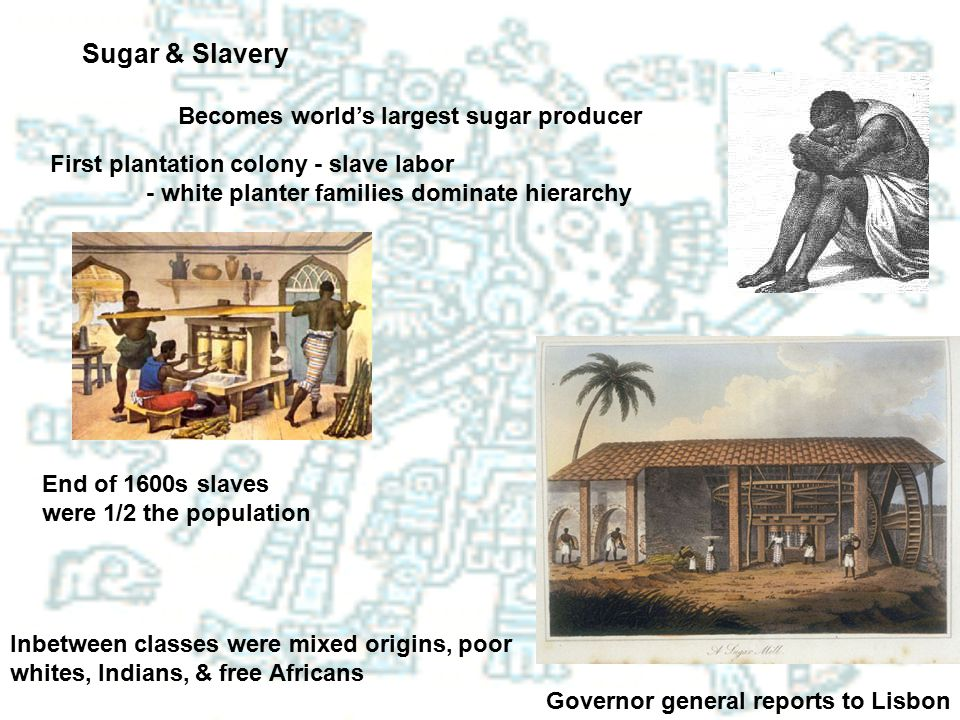 Sugar & Slavery Becomes world's largest sugar producer
