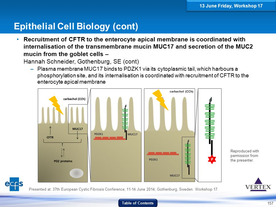 Epithelial Cell Biology (cont)