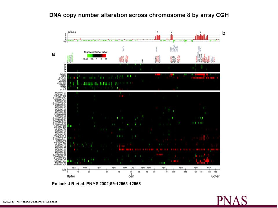 DNA copy number alteration across chromosome 8 by array CGH