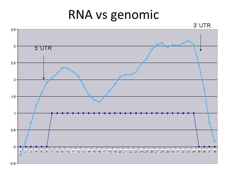 RNA vs genomic 3' UTR 5' UTR