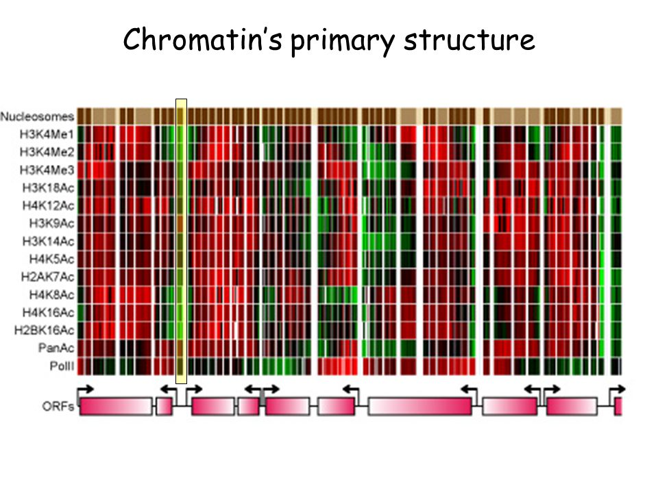 Chromatin's primary structure