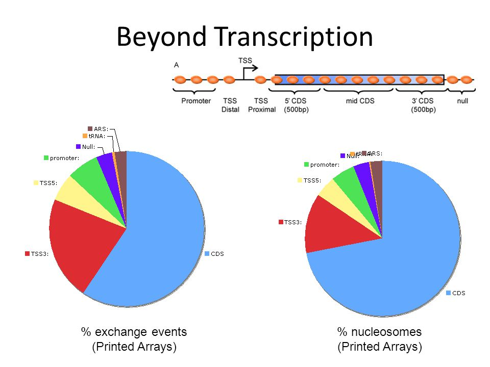Beyond Transcription % exchange events (Printed Arrays) % nucleosomes