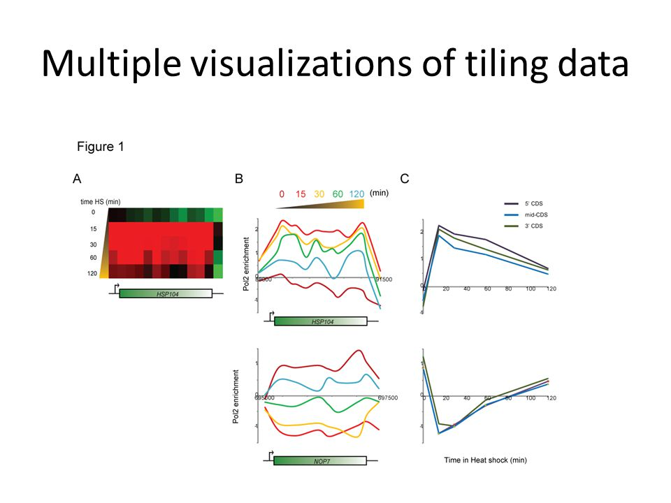 Multiple visualizations of tiling data