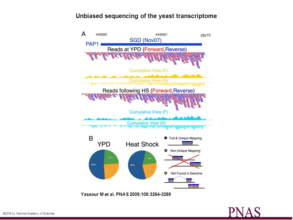 Unbiased sequencing of the yeast transcriptome