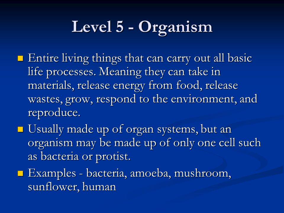 Level 5 - Organism