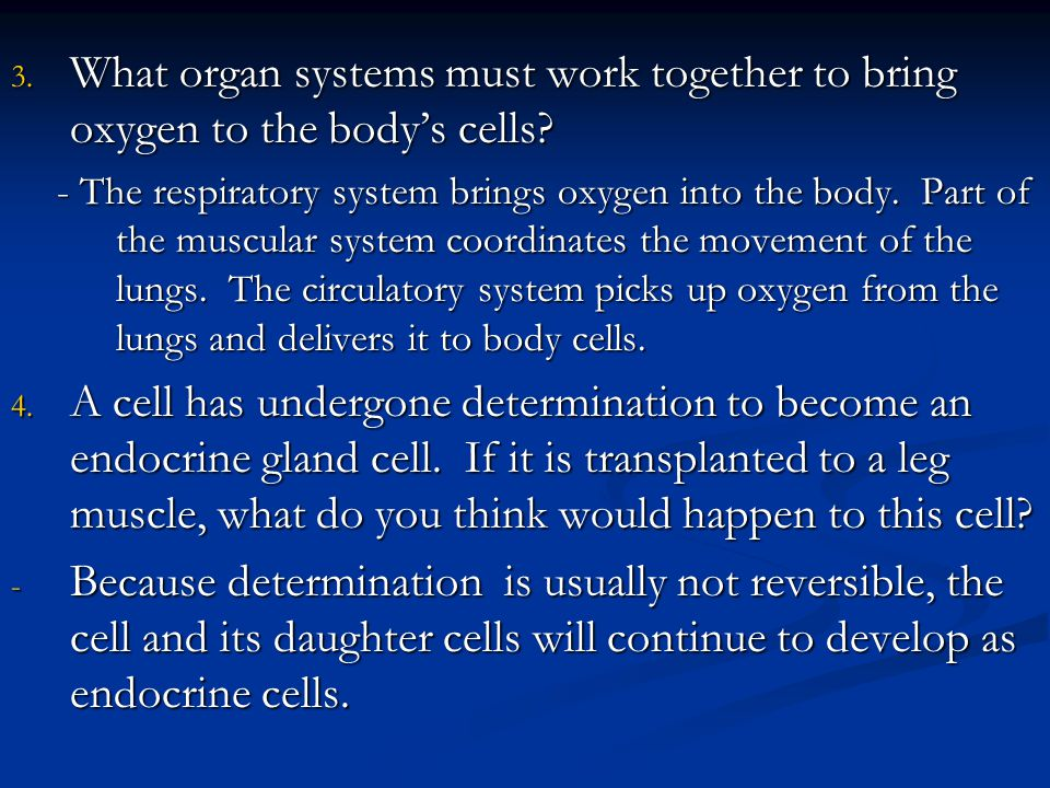 What organ systems must work together to bring oxygen to the body's cells