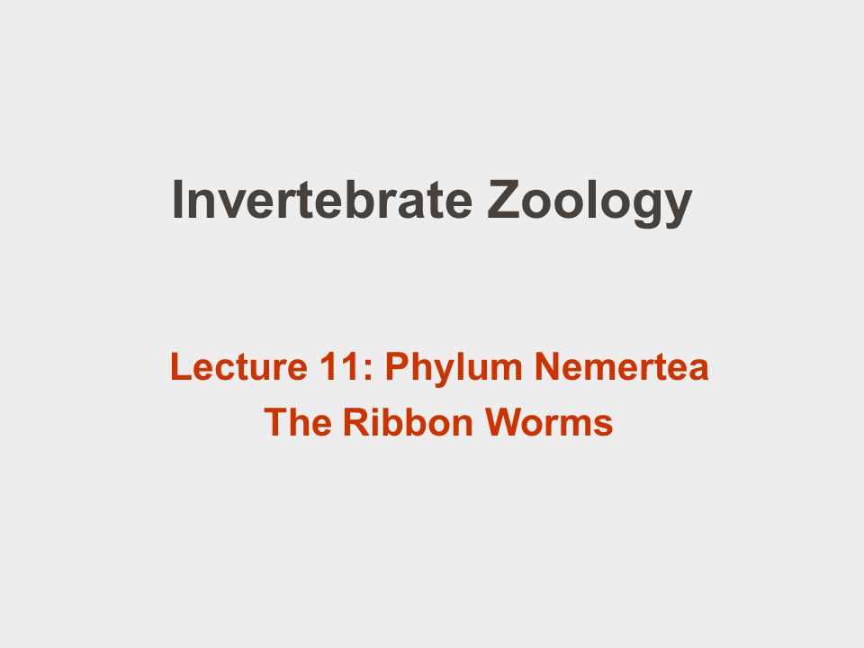 Lecture 11: Phylum Nemertea The Ribbon Worms