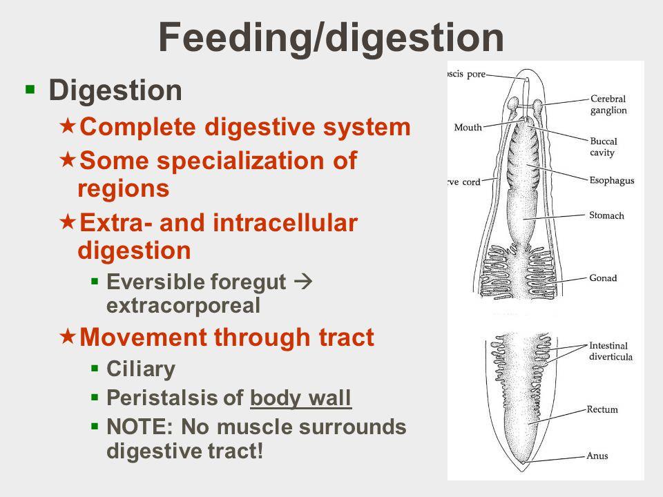 Feeding/digestion Digestion Complete digestive system