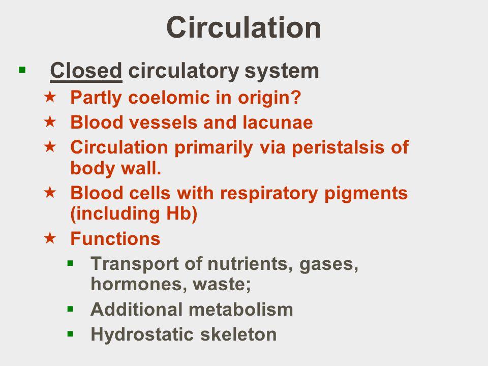 Circulation Closed circulatory system Partly coelomic in origin
